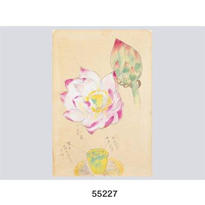 画像4: 花を描く 堅山南風素描集