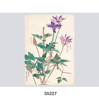 画像5: 花を描く 堅山南風素描集