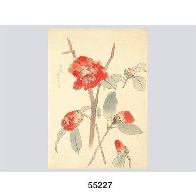 画像2: 花を描く 堅山南風素描集