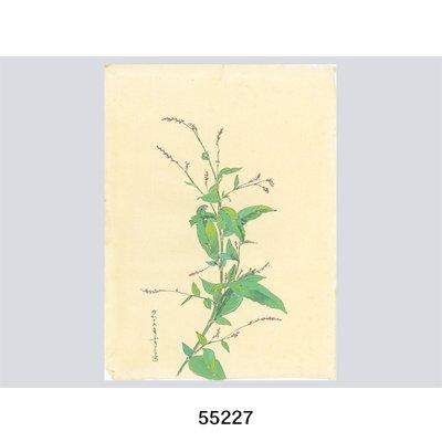 画像3: 花を描く 堅山南風素描集